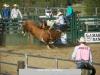 Bull Riding 2015 Rodeo