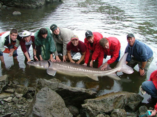 Flyfishing and bottom fishing on the salmon and snake river for How to fishing