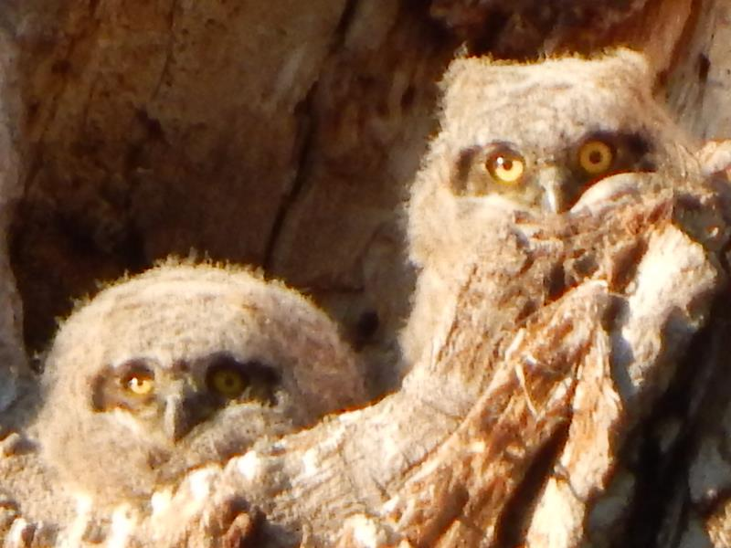 Owls Up Close and Personal